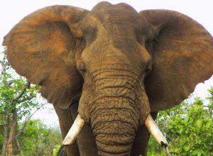 leben elefant im regenwald