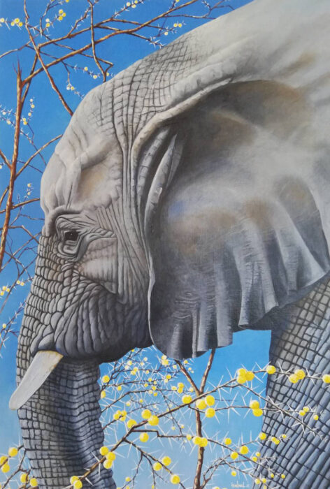 Elephant Portrait Etosha