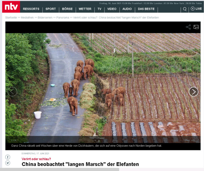 China wandernde Elefanten